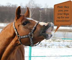 FREE Email Newsletter!!