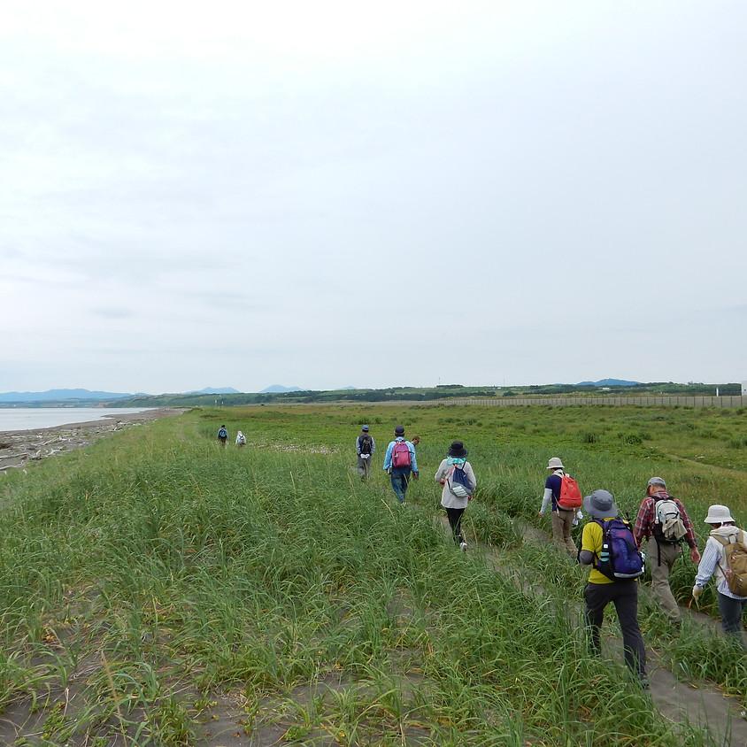 <会員限定>石狩海岸フットパスルート確認作業
