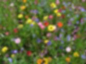 I coristi di Spirit Gospel Choir sono un bel giardino spontaneo