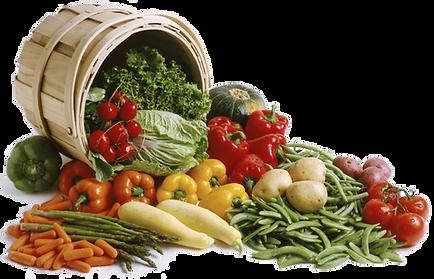 ortaggi surgelati foggia,vegetali surgelati foggia,fornitore vegetali foggia,distributore ortaggi surgelati foggia,forniture vegetali surgelati foggia,distributore vegetali foggia