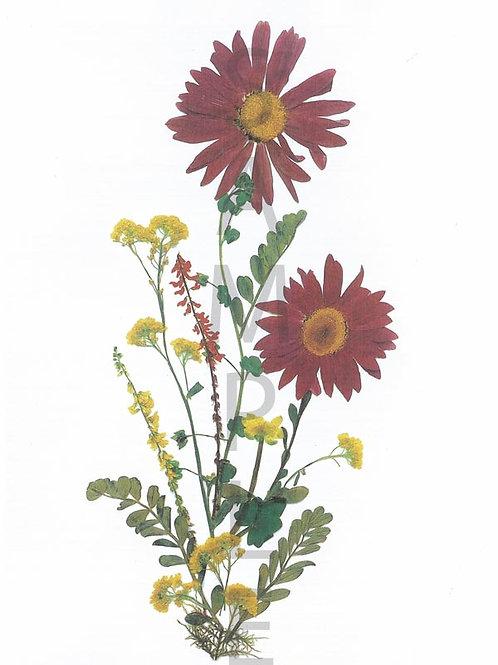 Hannelore Flower Print