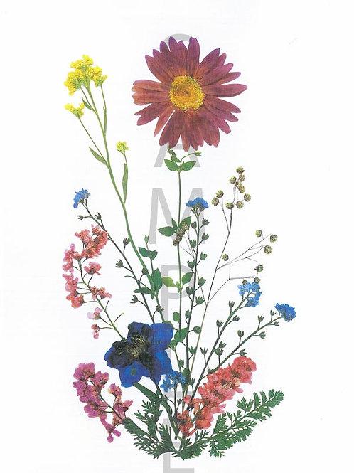 Gertrude Flower Print
