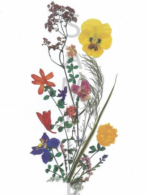 Edith Flower Print