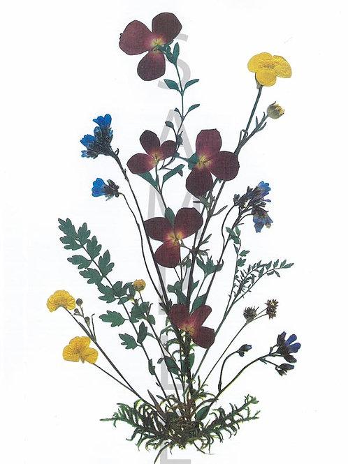 Hermine Flower Print