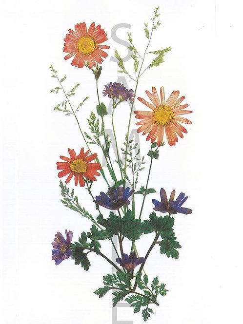 Julia Flower Print