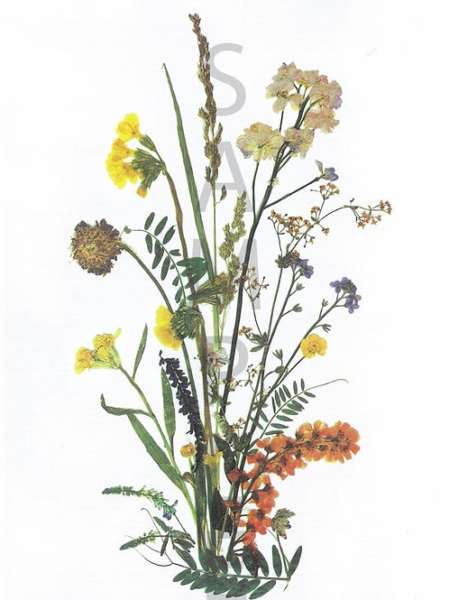 Bridgitte Flower Print