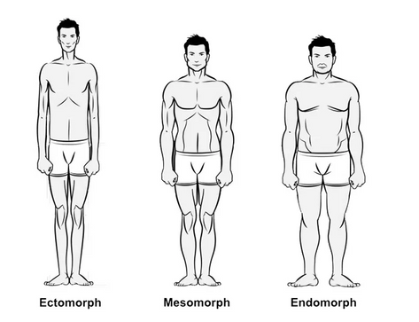 Maximizing Your Muscular Genetic Potential: Assessment Ratios by Body Type