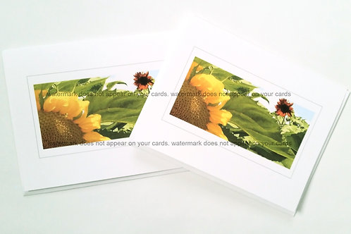Sunflowers- 6 notecards by Stan Kaplan