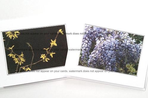 Forsythia / Wisteria- 6 notecards by Stan Kaplan