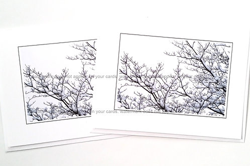 Dogwood with Snow- 6 notecards by Stan Kaplan