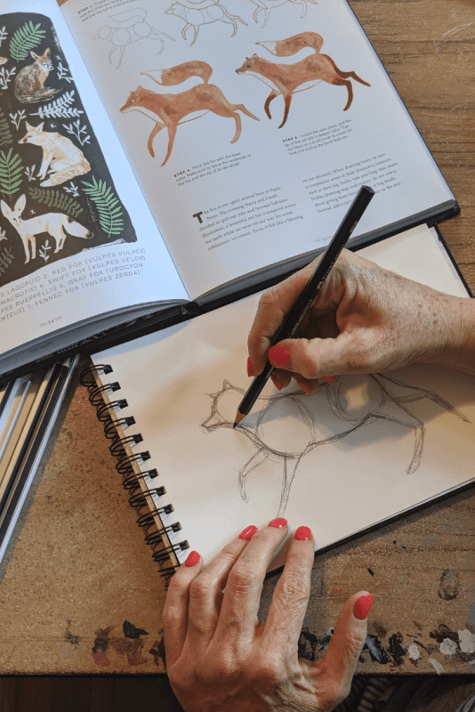 How to draw a fox step by step tutorial with The Creature Garden - An Illustrator's Guide to Beautiful Beasts & Fictional Fauna by Harry & Zanna Goldhawk .