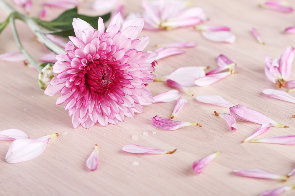 beautiful mum flowers on wooden background