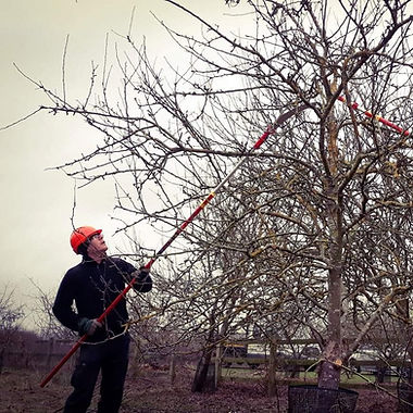 orchard pruning.jpg