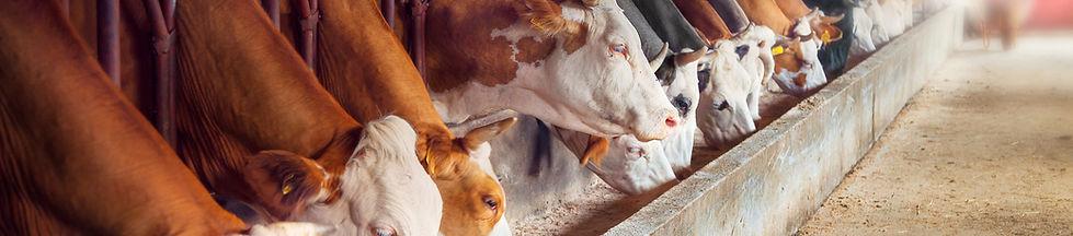 Nutrição Animal Zootenia UFRRJ Vital Jr