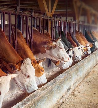 Fazenda de gado leiteiro