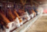 Milchbauernhof