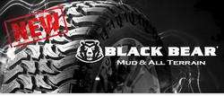 black-bear-NEW