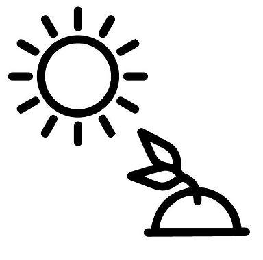 Direct_Sunlight_Cactus_Succulent_Pot_Vas