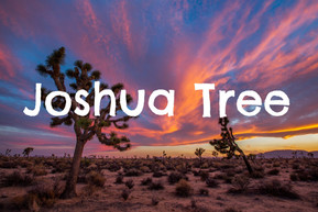 EXPLORE: Joshua Tree, CA