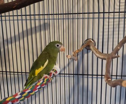 New Foster Bird! Henley