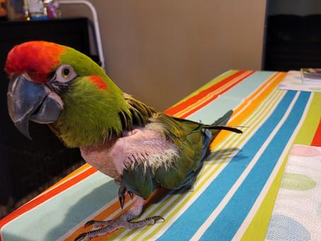 Meet Meeka!