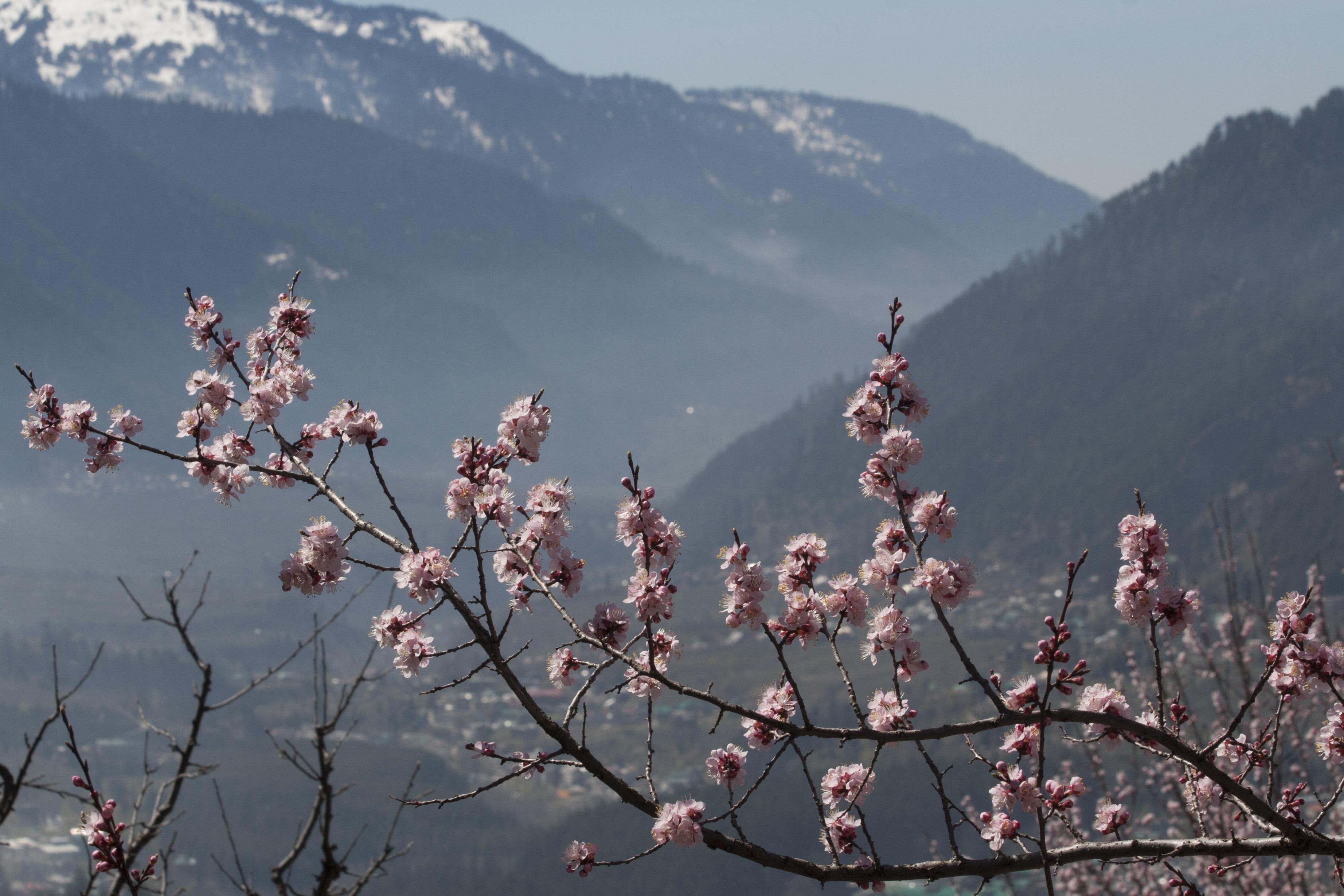 Spring in Manali