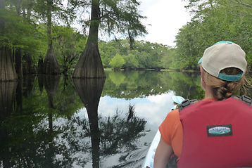 Ebenezer Creek kayak tour bald cypress