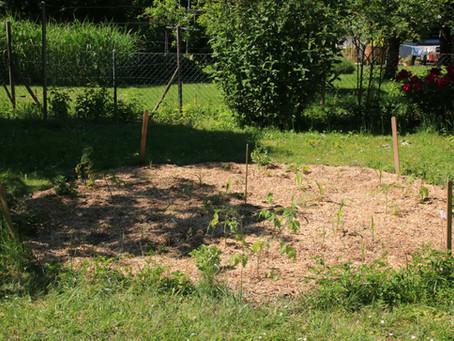 Garten Rosa - Unser erster Pflegegarten