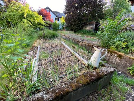 Garten Violett - unser erster Gemeinschaftsgarten