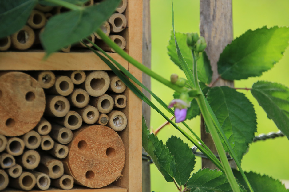 Bohne und Bienenhaus.JPG