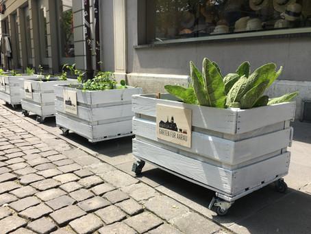Pflanzenpaten begrünen das Stadtbild