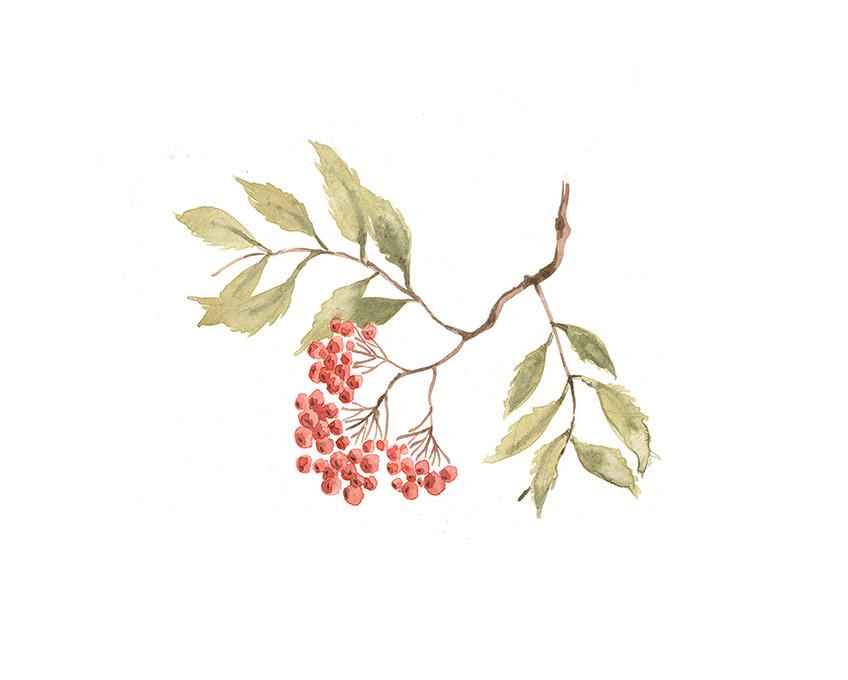 Rowan Berry Watercolour