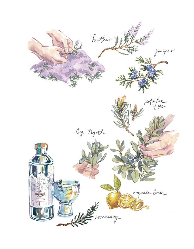 Dyfi Valley- Foraging botanicals