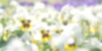 161009 Plantes en Fete Orcher ericdem (4