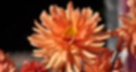 161008 24e Plantes en Fetes Orcher ericd