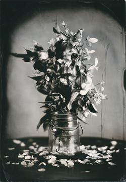 5x7 bga FLOWERS bell jar