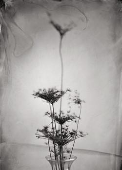 dead-flower-stems