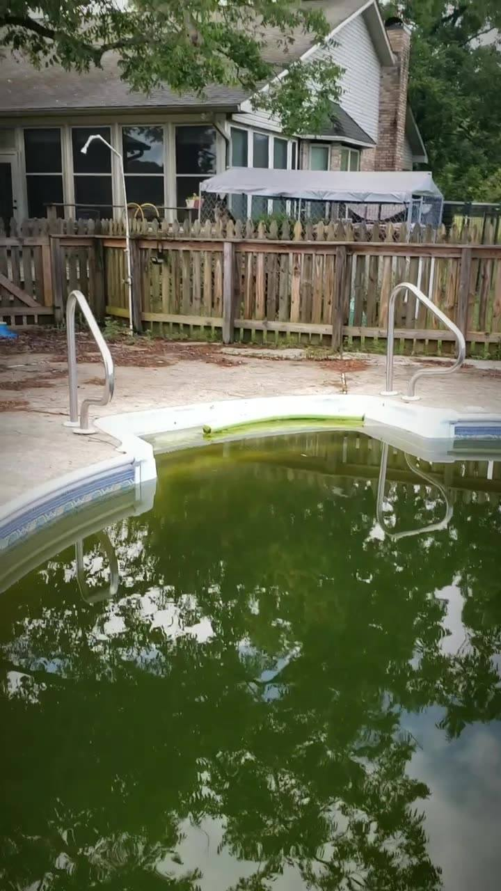 Pool Frog  Sanchuary