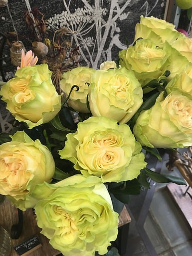 Roses dynamic