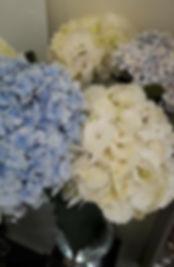 Hortensia blanc, hortensia bleu