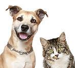 Image-Dog-wellness.jpg