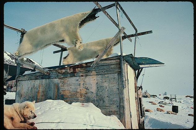 Banks Island Expedition 1995