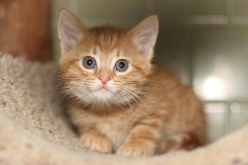 KittenPro.jpg