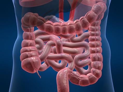 Saúde do Trato Gastrointestinal e sua relação com a glutamina