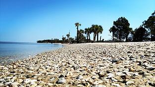 Eco Tours on St George Island and Apalachicola