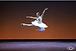 Ksenia Ovsyanick, Don Quixote, International Ballet Gala, StaatsBallett Berlin, English national Ballet, prima ballerina Belarus, Russia, London,