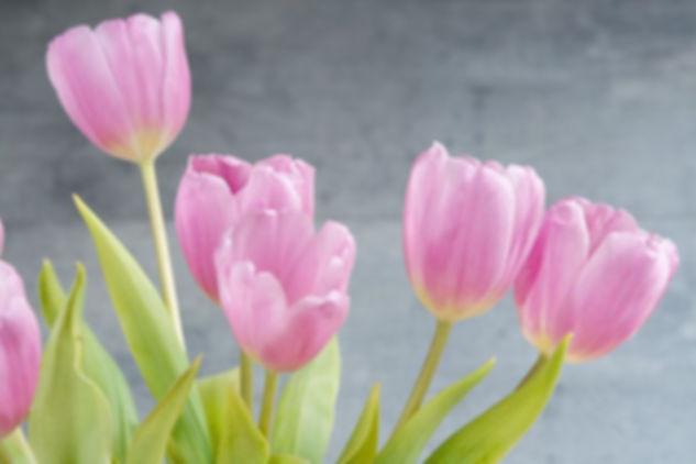 tulips-1352561__480.jpg