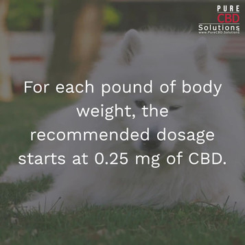 CBD Dosage for Your Dog_Topic Three