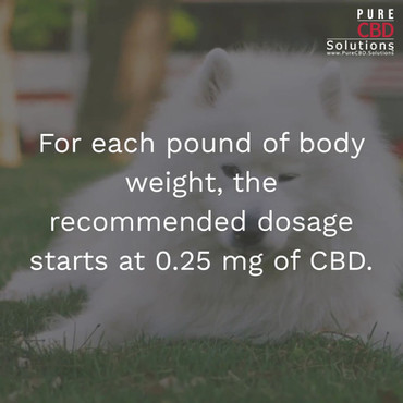 CBD Dosage for Your Dog_Topic Three