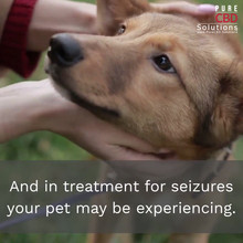 CBD Dosage for Your Dog_Topic Two